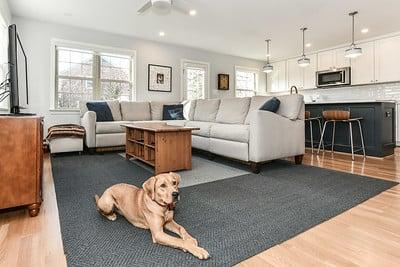Krauss family room w dog 3